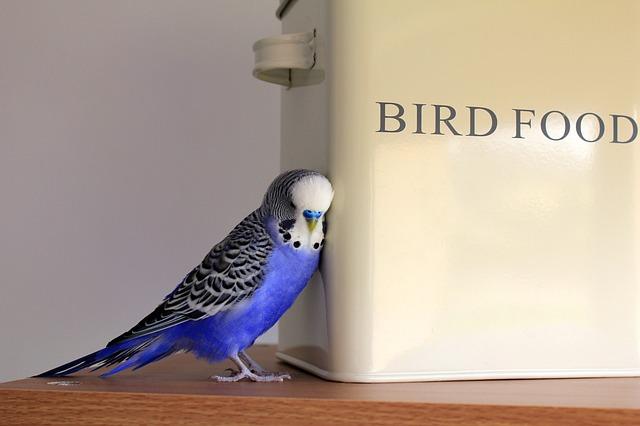alimentation pour oiseau