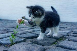 chaton qui joue avec une fleur