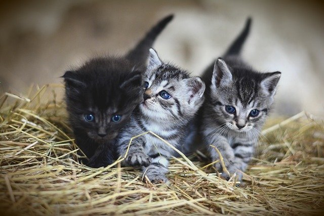 3 chatons