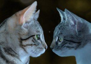 deux chats face à face
